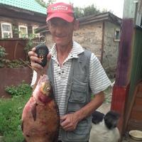 Александр, 64 года, Скорпион, Гороховец