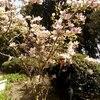 ИРИНА, 55, г.Ялта
