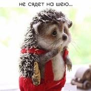 Igor 44 Москва