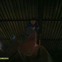 Сергей, 39 лет, Телец, Рязань