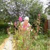Валентина, 60, г.Волгоград