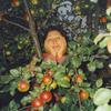 Людмила, 73, г.Санкт-Петербург