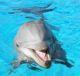 Дни диких дельфинов