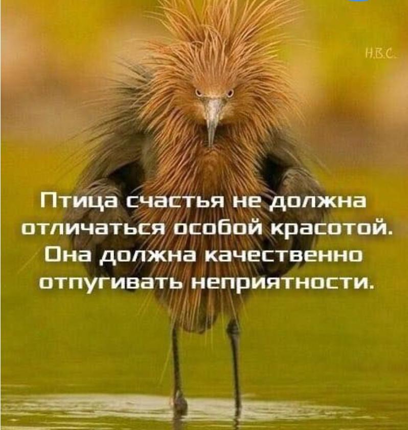 этом демотиваторы птица счастья этого необходимо