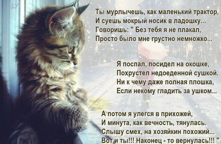 стихи про котика любимого следует взять