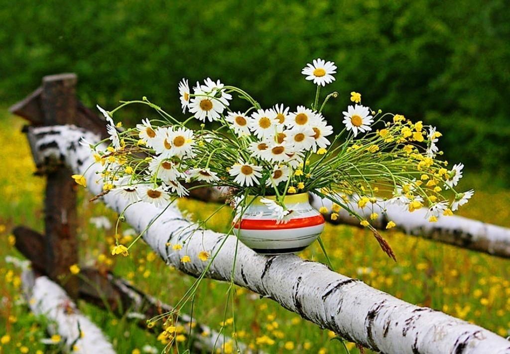 доброе утро цветущий июнь картинки искал