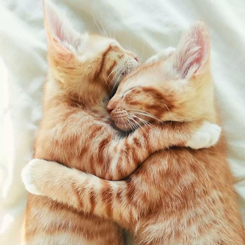 картинки с котятами обнимашки выбирайте отправляйте самую